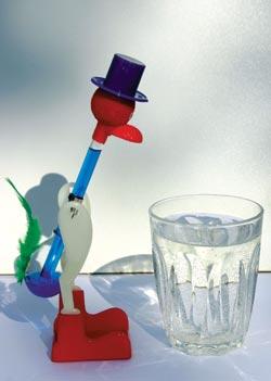 DRIKKEFUGLEN Noe av det nærmeste vi kommer en evighetsmaskin, er den klassiske drikkefuglen som aldri slutter å dyppe nebbet i vannet – så lenge det er vann i glasset. Fuglen tilføres energi ved at den forsyner seg med varme fra omgivelsene: Vann fordamper fra det fuktige nebbet, lufta i glassrøret avkjøles, og den flyktige eteren i fuglens glasskropp trekkes oppover i glasshalsen. Tyngdepunktet forandres slik at hodet bikker fremover og nebbet fuktes på nytt. Idet nebbet når vannet, vil «halsrøret» ha kommet i en slik posisjon at eteren renner tilbake i reservoaret, og fuglen retter seg opp igjen. Syklusen går så lenge det er varme omgivelser og noen sørger for å etterfylle vann i glasset. Foto: Arne Asphjell