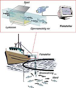 Et stykke av røret som brukes til å suge fisken fra mæren opp i brønnbåten er gjennomsiktig. Her er det montert speil og lyskastere slik at det er mulig å videofilme fisken fr asinde og ovenfra. Kombinasjonen av disse bildene gjør det mulig å beregne volum og vekt.Illustrasjon: Jan H. Johansen/Grafisk senter, SINTEF