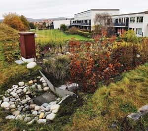 Regnbed samler opp vannDette regnbedet på 50 kvm er størst i sitt slag i Norge og ligger litt utenfor Trondheim sentrum. Det er ett av flere tiltak for å hindre flom lenger ned i bebyggelsen. Bedet har en forsenkning i jorda med planter som liker mye vann. Vannet kommer fra takrenner, asfalterte plasser og høyereliggende terreng, og står ei stund i bedet før det synker ned i jorda. Her er det måleutstyr med sensorer, og doktorgrads- og masterstudenter ved NTNU skal skaffe seg mer kunnskap om virkningen. Foto: Adresseavisen