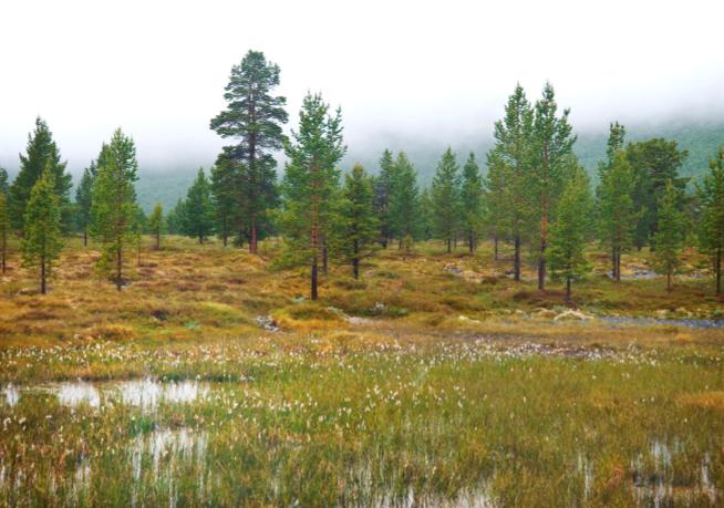 Bilde av norsk myrområde.
